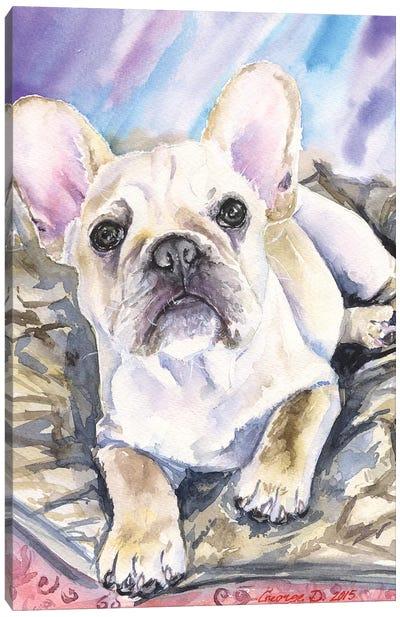 Cream French Bulldog Puppy Canvas Art Print