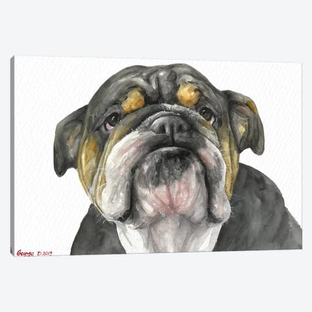 English Bulldog Look Canvas Print #GDY268} by George Dyachenko Canvas Wall Art