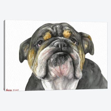English Bulldog Look Canvas Print #GDY268} by George Dyachenko Canvas Wall Art