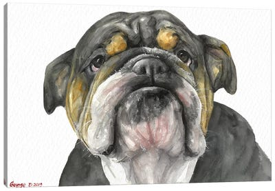 English Bulldog Look Canvas Art Print