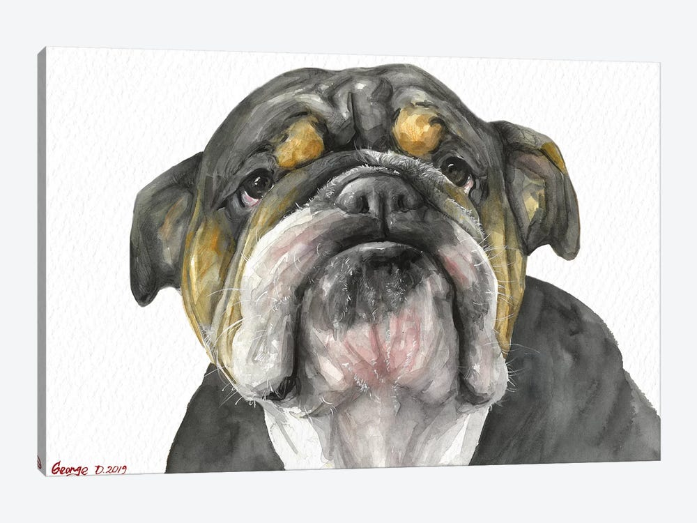 English Bulldog Look by George Dyachenko 1-piece Canvas Art Print