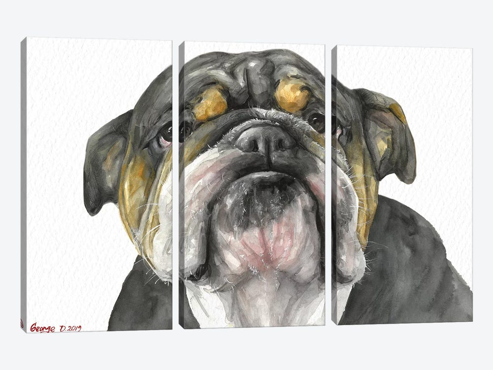 English Bulldog Look by George Dyachenko 3-piece Canvas Print