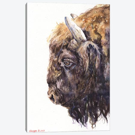 Buffalo Canvas Print #GDY27} by George Dyachenko Canvas Wall Art