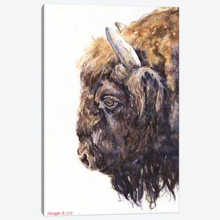 Buffalo Canvas Print #GDY27} by George Dyachenko Canvas Wall Art