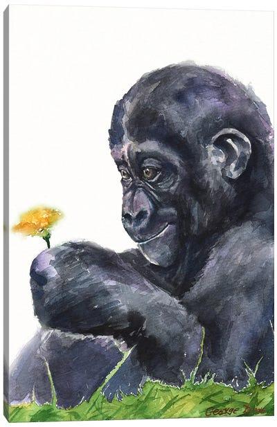 Gorilla baby Canvas Art Print