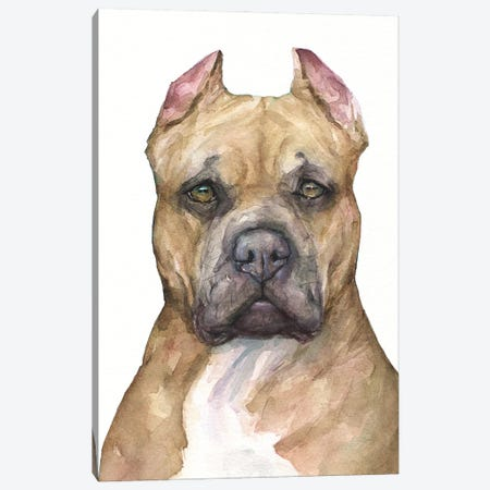 Pit bull Canvas Print #GDY287} by George Dyachenko Canvas Art Print