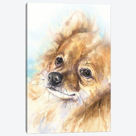 Pomeranian Canvas Print #GDY288} by George Dyachenko Canvas Wall Art