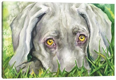 Weimaraner eyes Canvas Art Print