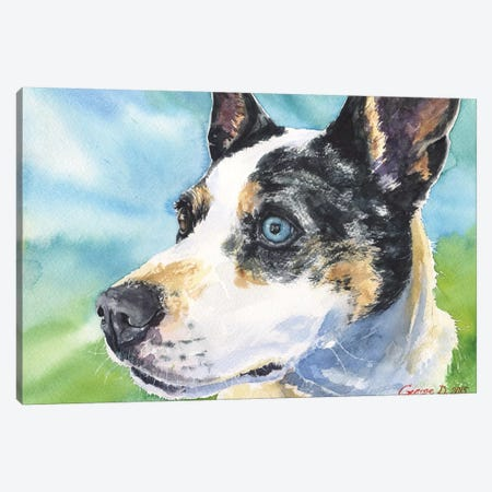 Australian Cattle Dog Canvas Print #GDY2} by George Dyachenko Canvas Artwork