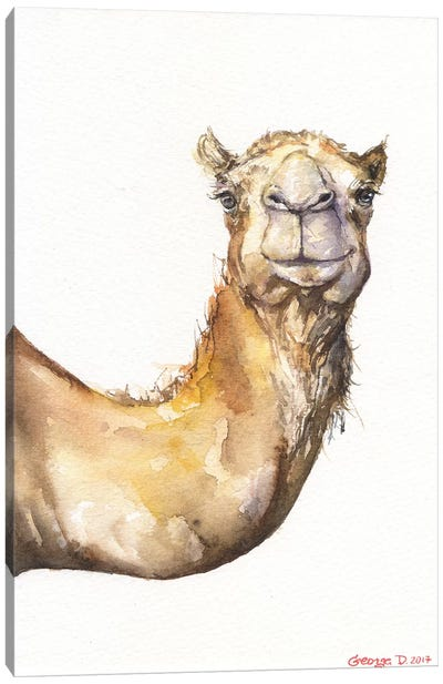 Camel Canvas Art Print