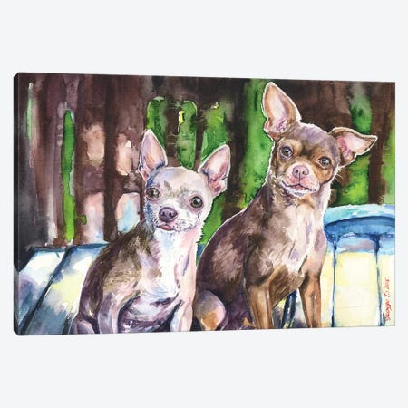 Chihuahuas Canvas Print #GDY38} by George Dyachenko Canvas Wall Art