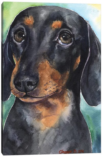 Dachshund Puppy Canvas Art Print
