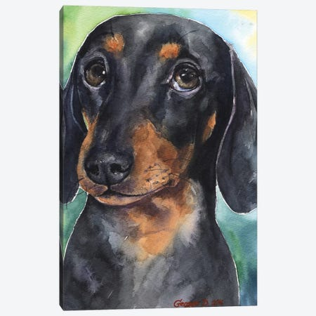Dachshund Puppy Canvas Print #GDY47} by George Dyachenko Canvas Art