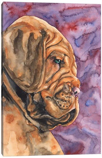 Dogue de Bordeaux Puppy Canvas Art Print