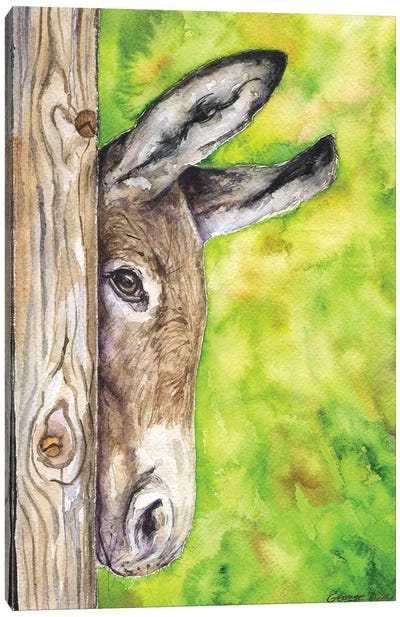 Donkey In Nature Canvas Art Print