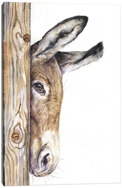 Donkey On White Canvas Art Print