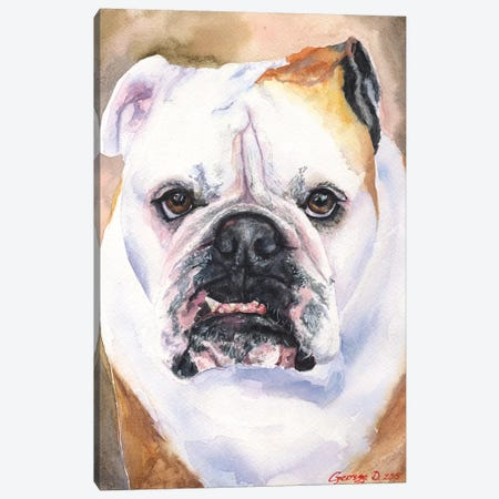 English Bulldog I Canvas Print #GDY61} by George Dyachenko Canvas Print