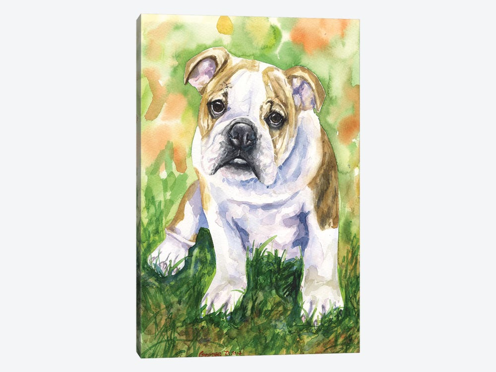 English Bulldog IV by George Dyachenko 1-piece Canvas Wall Art