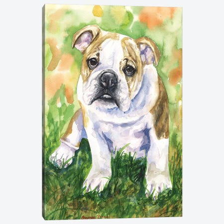 English Bulldog IV Canvas Print #GDY64} by George Dyachenko Canvas Art