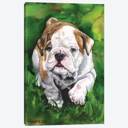 English Bulldog Puppy Canvas Print #GDY65} by George Dyachenko Canvas Art