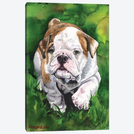 English Bulldog Puppy Canvas Print #GDY65} by George Dyachenko Canvas Art