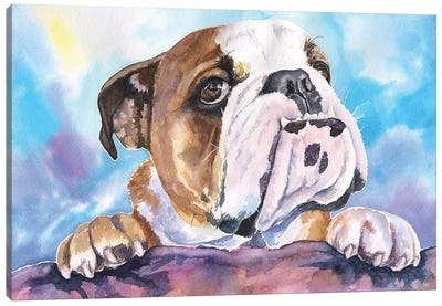 English Bulldog V Canvas Art Print