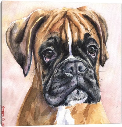 Fina Boxer Canvas Art Print