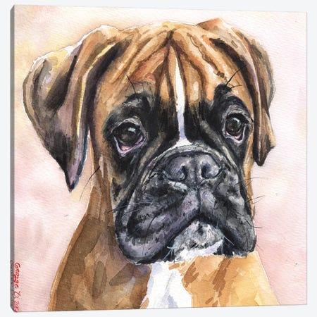 Fina Boxer Canvas Print #GDY68} by George Dyachenko Canvas Art Print