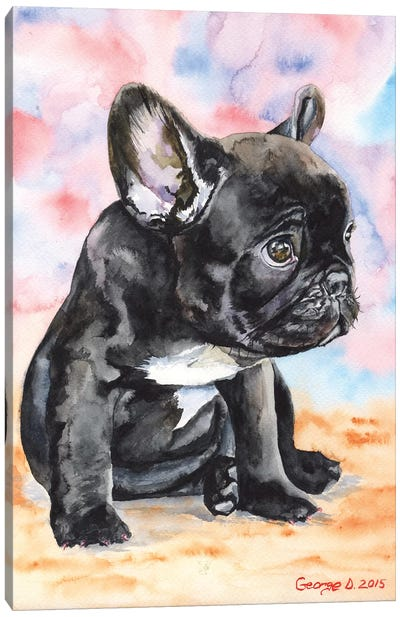 French Bulldog Puppy II Canvas Art Print