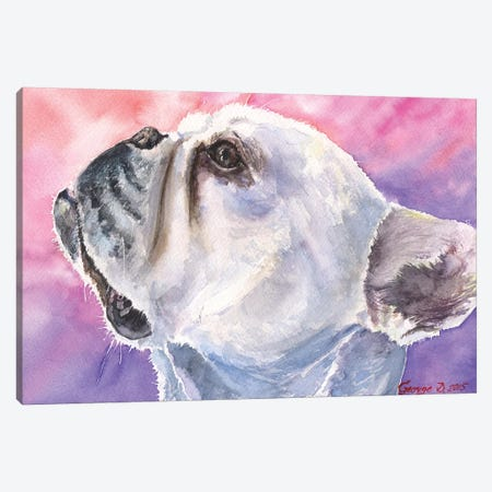 French Bulldog VI Canvas Print #GDY73} by George Dyachenko Canvas Art