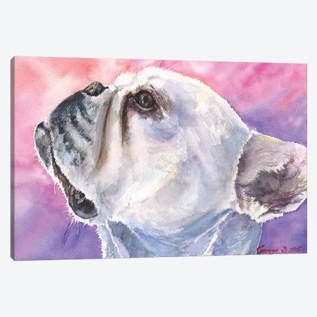 French Bulldog VI Canvas Print #GDY73} by George Dyachenko Canvas Art