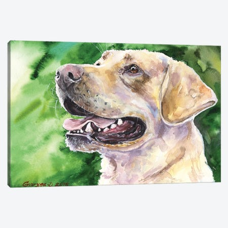 Golden Labrador I Canvas Print #GDY82} by George Dyachenko Canvas Print