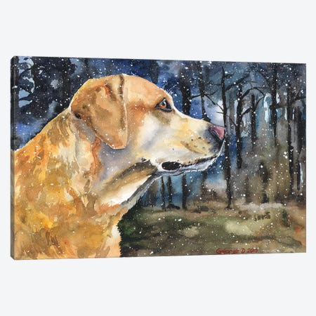 Golden Labrador II Canvas Print #GDY83} by George Dyachenko Canvas Art Print