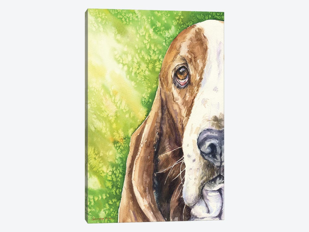 Basset On Green by George Dyachenko 1-piece Canvas Print