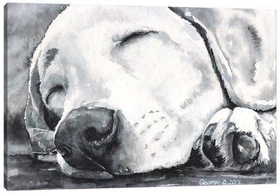 Happy Dreams Canvas Art Print