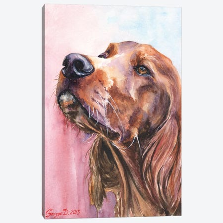 Irish Setter Canvas Print #GDY99} by George Dyachenko Canvas Art