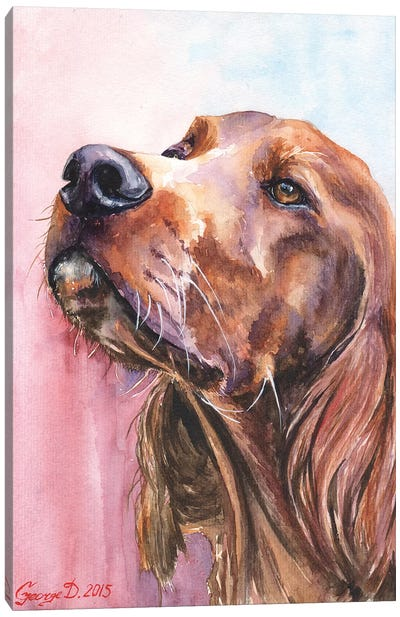 Irish Setter Canvas Art Print
