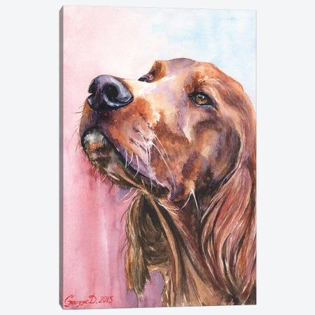 Irish Setter Canvas Print #GDY99} by George Dyachenko Canvas Art