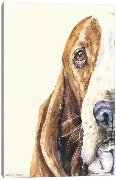 Basset On White Canvas Art Print