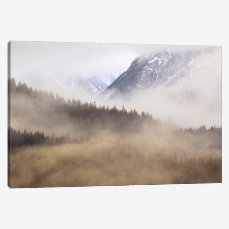 Fog In Old Growth Forest, Chilkat River Wilderness, Alaska Canvas Print #GEE12} by Gerry Ellis Art Print