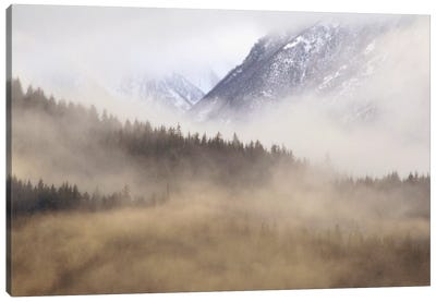 Fog In Old Growth Forest, Chilkat River Wilderness, Alaska Canvas Art Print