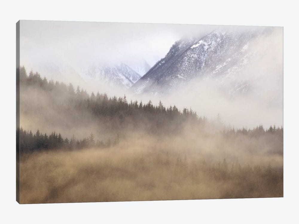 Fog In Old Growth Forest, Chilkat River Wilderness, Alaska by Gerry Ellis 1-piece Canvas Artwork