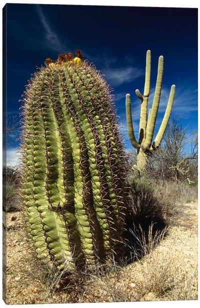 Saguaro With Fishhook Barrel Cactus In The Foreground, Sonoran Desert, Arizona Canvas Art Print