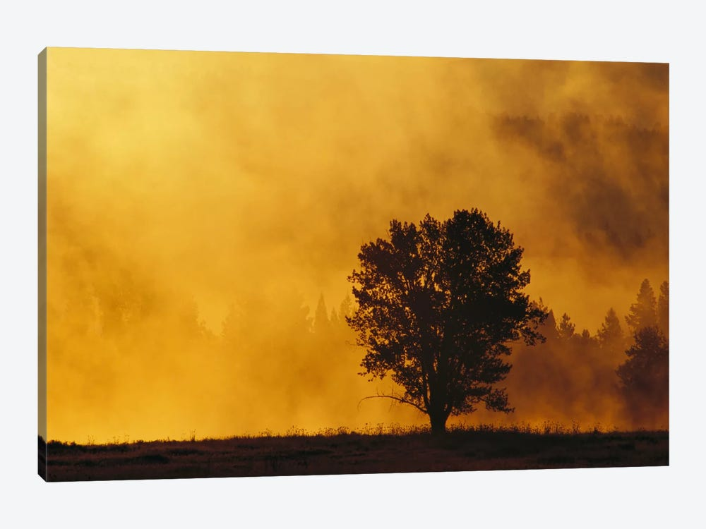 Sunrise Through Thermal Fog And Lone Tree, Snake River, Grand Teton National Park, Wyoming by Gerry Ellis 1-piece Canvas Wall Art