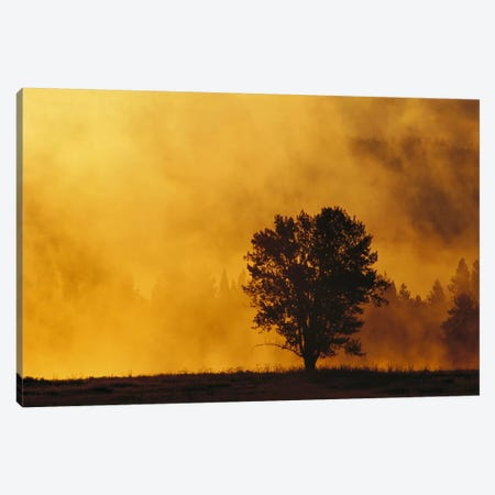 Sunrise Through Thermal Fog And Lone Tree, Snake River, Grand Teton National Park, Wyoming 3-Piece Canvas #GEE25} by Gerry Ellis Canvas Print