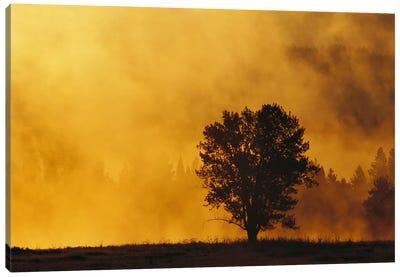 Sunrise Through Thermal Fog And Lone Tree, Snake River, Grand Teton National Park, Wyoming Canvas Art Print