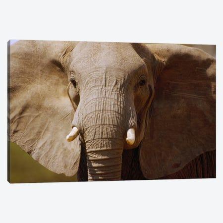 African Elephant Close Up, Amboseli National Park, Kenya Canvas Print #GEE2} by Gerry Ellis Canvas Art