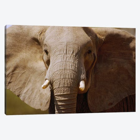 African Elephant Close Up, Amboseli National Park, Kenya Canvas Print #GEE2} by Gerry Ellis Canvas Art