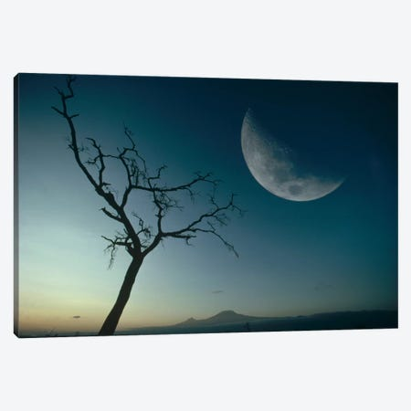 Whistling Thorn And Moon, Amboseli National Park, Kenya Canvas Print #GEE32} by Gerry Ellis Art Print