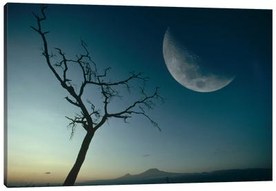 Whistling Thorn And Moon, Amboseli National Park, Kenya Canvas Art Print